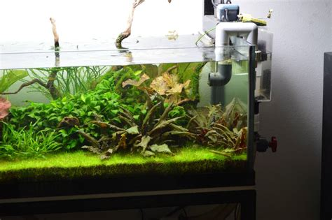 green acres  gal high tech page   planted tank