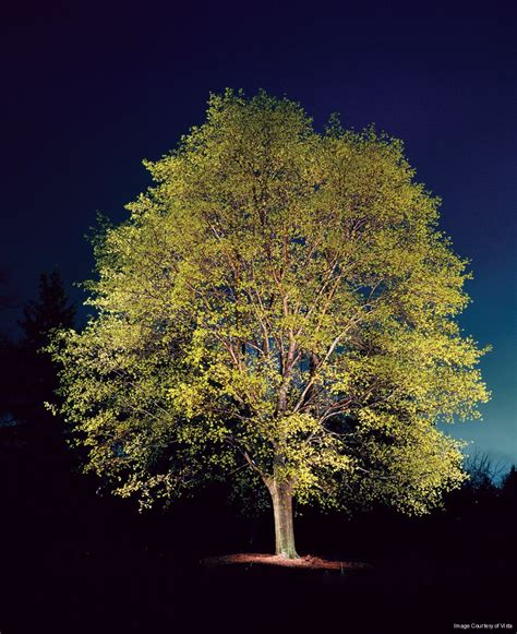 Outdoor Up Lighting For Trees Outdoor Lighting Company Uplighting Mirror Lighting Raleigh Nc