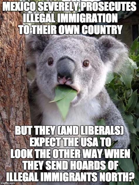 Koala Meme Generator - wtf koala imgflip