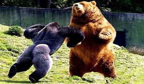 imagenes de animales fuertes los 10 animales m 225 s fuertes y poderosos del mundo youtube