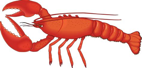 lobster clip lobster clip clipart panda free clipart images