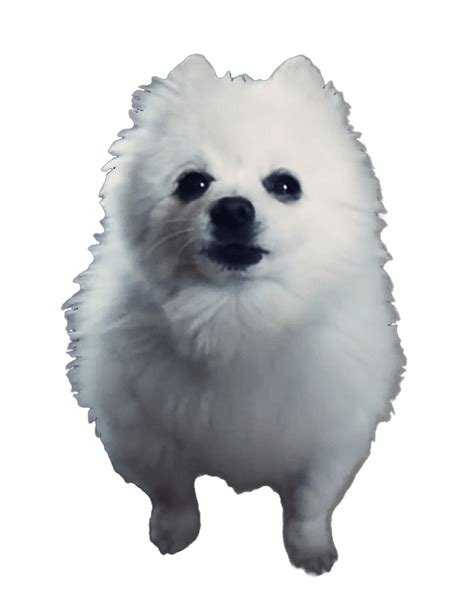 what breed is gabe the doge meme white background