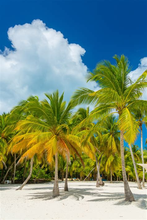 tropical palm trees tropical palm trees free stock photo domain pictures