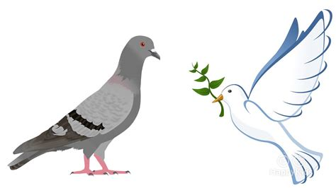animal facts what is the difference between pigeons and