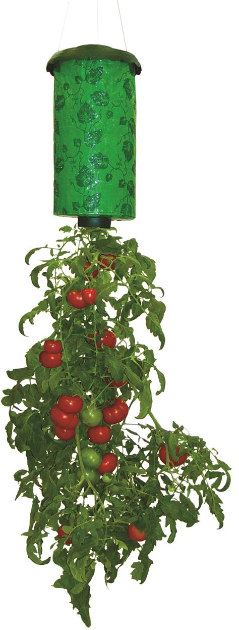 Topsy Turvy Strawberry Planter by Six Gifts To Spread The Of Growing Rosebud Magazine