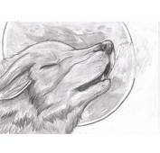 Wolf Drawings Howling  Car Interior Design