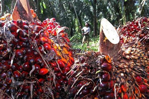 Minyak Inti Kelapa Sawit daripada ke eropa ekspor minyak sawit ke india lebih