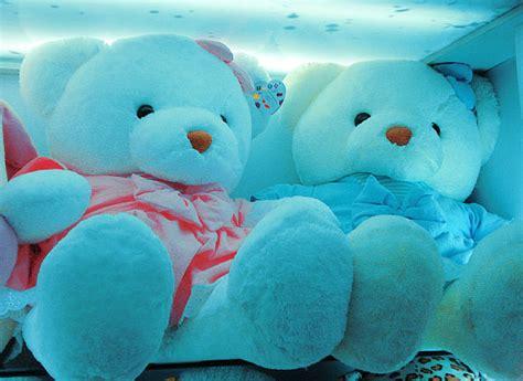 wallpaper couple bear white teddy bear with heart wallpaper