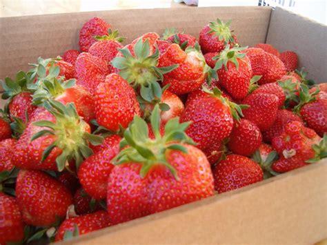 C R E A M Viii Strawberry Pound Cake Ejm 1 berrier farm localharvest