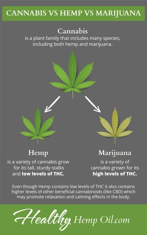 hemp cbd a primer on cannabinoids and cannabis medicine for better health books cannabis not what you think hemp vs cannabis