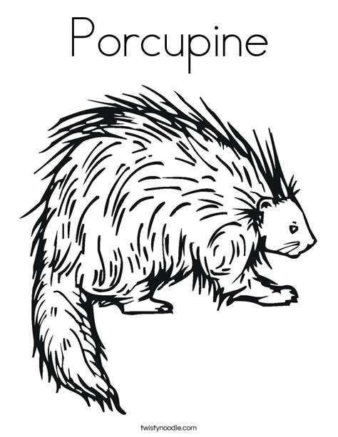 porcupine coloring page twisty noodle