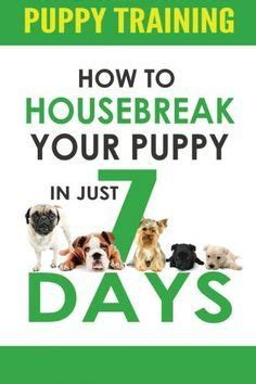 how to house train your dog in 7 days 25 best ideas about training a puppy on pinterest puppy care dog training treats