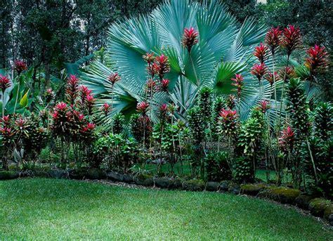 tropicalplants and trees com plants amazing tropical scenery garden vignettes exotic plants