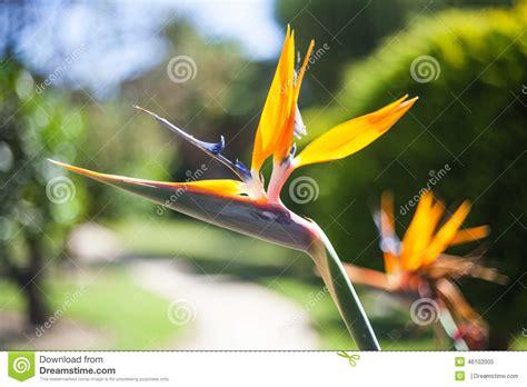 fiore raro fiore raro fotografia stock immagine 46102005