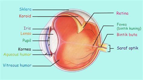 bagian bagian mata beserta fungsi gambar penyakit