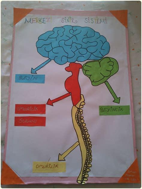 Poster Sistem Endokrin denetleyici sistem 1