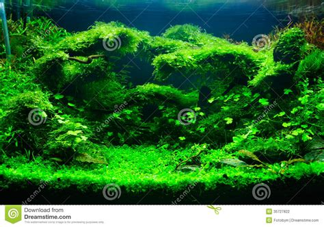aquascaping tropical fish tank a green planted aquarium stock photography image 35727822