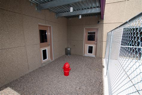 potty area pets pictures of woofdah s new building best daycare in the minneapolis