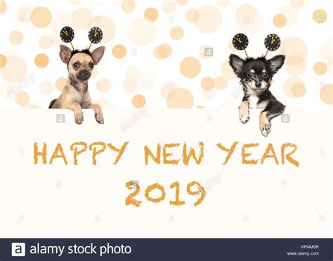 new year animal 2019 100 happy new year animals send a happy new year