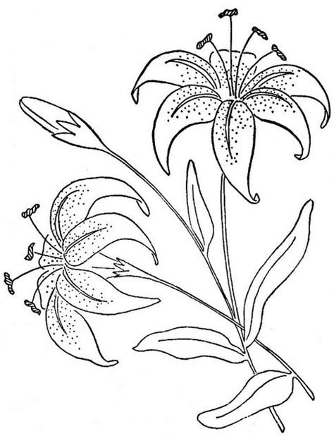 tiger lily coloring page 17 best images about printables flowers on pinterest