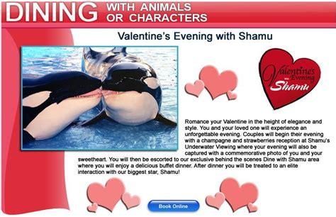 valentines in orlando shamu s day orlando date guide