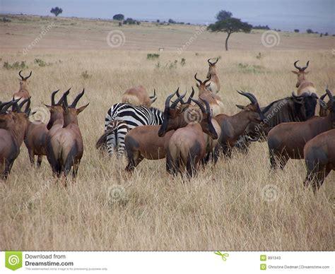 imagenes animales africanos animales africanos fotos de archivo imagen 891343