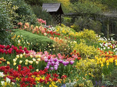 tải những h 236 nh ảnh đẹp về vườn hoa hồng tuyệt đẹp hinh anh dep nhat hinh nen may tinh dien