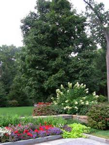 landscaping ideas for landscaping with trees and shrubs