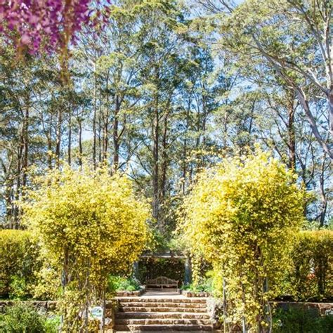 Wedding Ceremony Blue Mountains by Blue Mountains Botanic Garden Wedding Venues Mount Tomah
