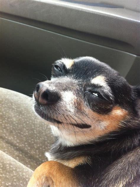 Dog Face Meme - stupid dog face