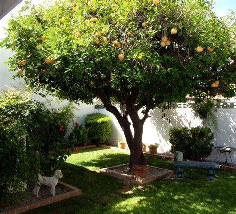 obstbaum kleiner garten b 228 ume f 252 r den garten tipps ideen f 252 r gro 223 e und kleine
