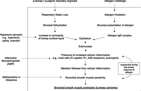 Children Of The Mechanism frontiers airway hyperresponsiveness in asthma
