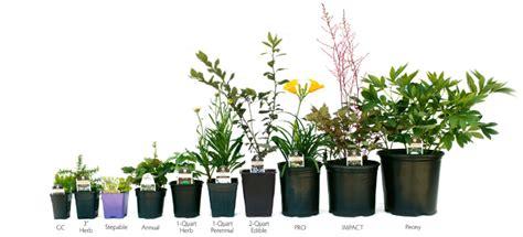 Planter Sizes by Nursery Pot Sizes Thenurseries