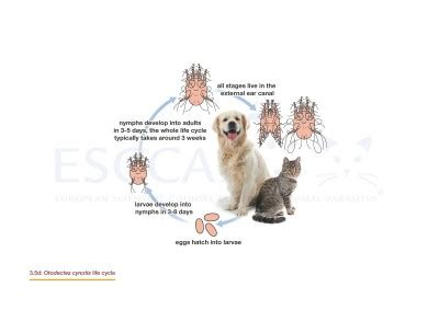 life cycles glmg control  ectoparasites  dogs