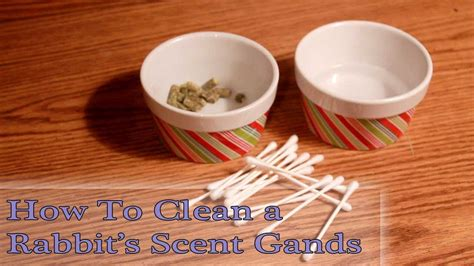 how to clean glands how to clean rabbit scent glands
