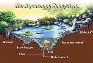 Aquascape Pond Filters Pond Ecosystem Stone Age Landscaping