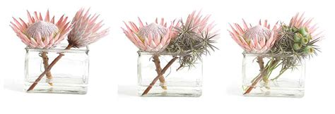Rustic Contemporary flower arranging king proteas
