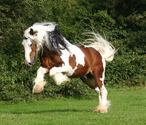 Clydesdale Wallpapers   Wallpaper Cave