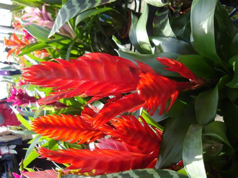 tropical plant names and pictures florida tropical plants names be sure to visit