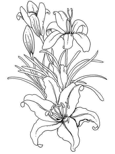 coloring pictures of lily flowers lilium flower coloring pages for adults coloring pages