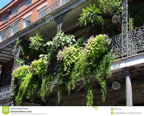 garten auf französisch balkon farn garten lizenzfreie stockfotografie bild