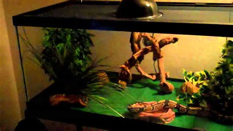 setter decorator python ball python cage set up pt 2 youtube
