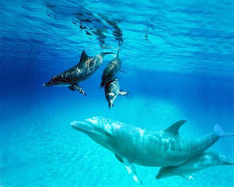 le monde merveilleux de la mer mon nid douillet doctissimo