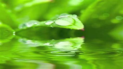 imagenes zen agua m 250 sica con agua relajante para estr 201 ss trabajo estudiar