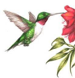 Displaying 20 gallery images for hummingbird color drawings