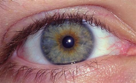 what part of the eye has color file hazel caucasian age 23 jpg wikimedia