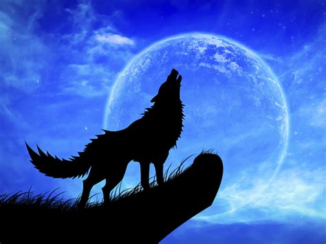 wolf moon peter owen peter and the wolf what s on