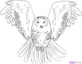 How to draw an owl step 5 1 000000002930 5 jpg