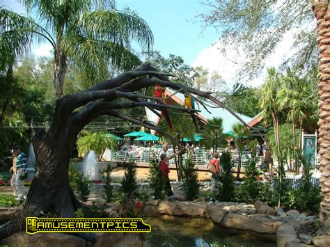 Busch Gardens Website by Bird Garden At Busch Gardens Ta Bay Florida
