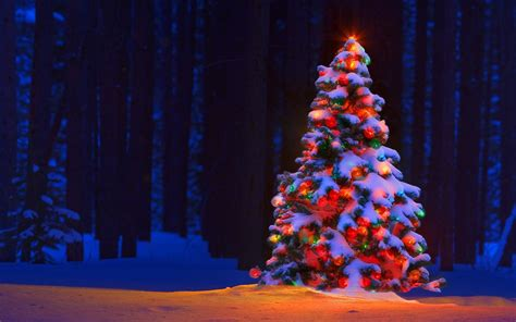 christmas tree wallpapers images photos pictures backgrounds